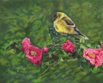 Goldfinch on Cameliia