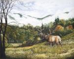 Morning in the Valley - Elk in Cataloochee wildlife