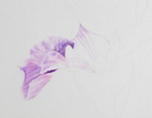 IMG_1560 La Iris Update 3