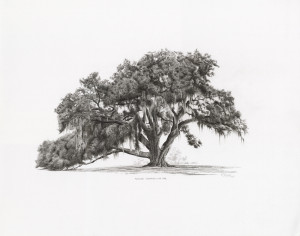 Florida Champion Live Oak Art Walk