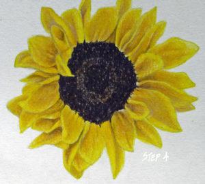 img_2264-intro-sunflower