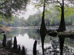 IMG_2322 WIP Suwannee River Update 1