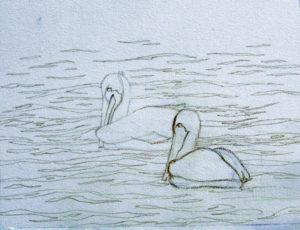 img_2390b-wip-pelicans-update-1