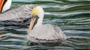 img_2416-pelicans-update-3d