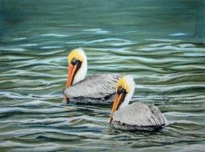 img_2424-pelicans-update-3f