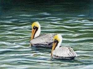 img_2440-pelicans-update-3